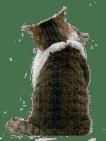 CAT HUGS chat