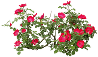 plants flowering - Nitsa P