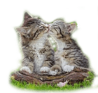 CATS KISS chats amour