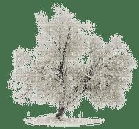 chantalmi  givre hiver winter neige  snow noël arbre