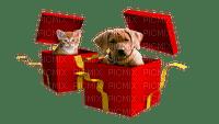 dog cat chat chien animal tube  animals gift present katze hund     christmas noel xmas weihnachten Navidad рождество natal