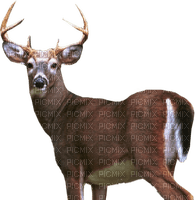Kaz_Creations Deer