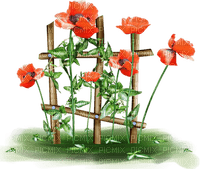 coquelicot deco poppy flower