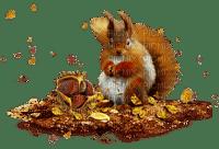 autumn squirrel automne écureuil