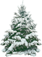 tree fir arbre winter hiver paysage landscape forest snow neige fond background