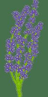 lavender, laventeli