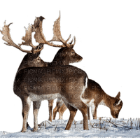 deer reh cerf animal animals  hirsch tube winter hiver