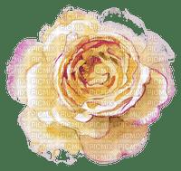 Rose pêche
