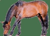 patrcia87 cheval