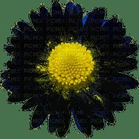 daisy flower SPRING marguerite fleur printemps