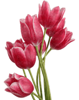 Kaz_Creations Deco Flowers Tulips Flower