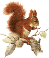 Kaz_Creations Squirell Autumn
