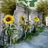 wall mauer garden jardin sunflower flower fleur tree way mur tournesol sonnenblumen path tube autumn automne herbst paysage