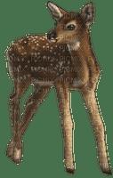 deer katrin