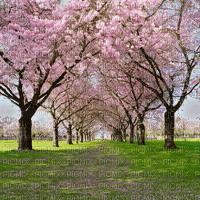 spring printemps frühling primavera весна wiosna   fond background garden jardin  paysage landscape tube blossom blüte fleur tree arbre baum
