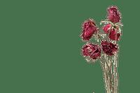 munot - rosen blumen - roses flowers - roses fleurs