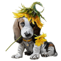 chien tournesol dog sunflowers