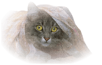 laurachan cat