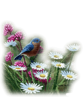 bird on flower spring oiseaux printemps