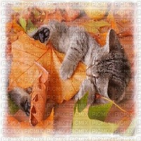 fond autumn automne chat cat