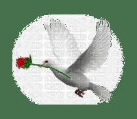 Bird, Birds, Animal, Animals, Dove, Doves, Flower, Flowers, Rose - Jitter.Bug.Girl