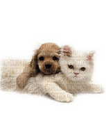 Kaz_Creations Cats Cat Kittens Kitten Dog Pup Cute