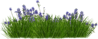 spring printemps frühling primavera весна wiosna tube deco flower fleur blossom bloom blüte fleurs blumen  garden jardin lit bed beet grass