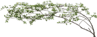 branch zweig deco spring printemps frühling primavera весна wiosna flower fleur blossom bloom blüte fleurs blumen garden jardin garten tube