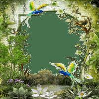 jungle forest frame jungle forêt cadre
