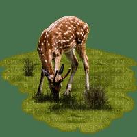 luonto, nature, animal