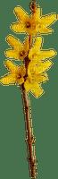 Yellow.Flower.Fleurs.Branche.Victoriabea