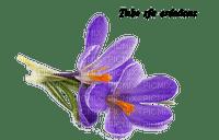 rfa créations - crocus mauve