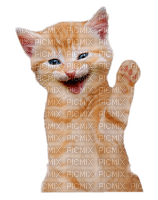 cat cats - chat chats - paintinglounge
