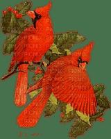 winter hiver bird oiseau red garden