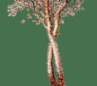 autumn tree kikkapink