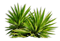 plante plantes plant plants_tube__Blue DREAM 70