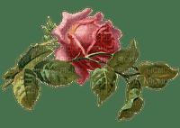 ruusu, rose, vintage