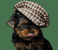 patricia87 chien