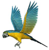 parrot, sunshine3