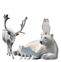 Animaux-blanc-snow-neige-Noël Christmas-winter