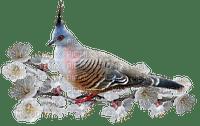 Bird in Spring