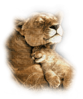 felins lion and baby