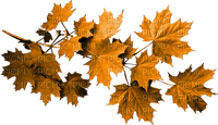 autumn leaves_automne feuille__Blue DREAM 70