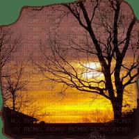 TREE PAYSAGE SUN