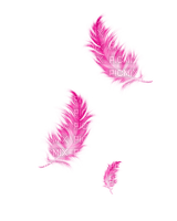 pink feather plume