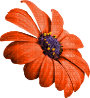 fleur-orange-fiore-arancione-flower-blomma-orange-minou52