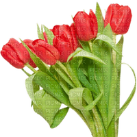 tulips flowers spring red  tulipes fleurs printemps