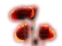 chantalmi fleur coquelicot rouge orange