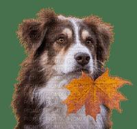 autumn dog automne chien