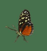 perhonen, papillon
